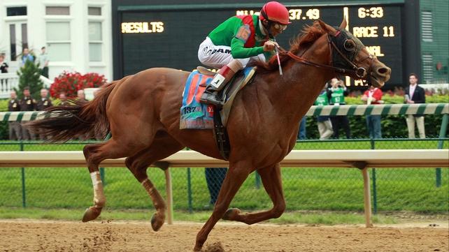 Animal Kingdom - Winner of the 137th Kentucky Derby