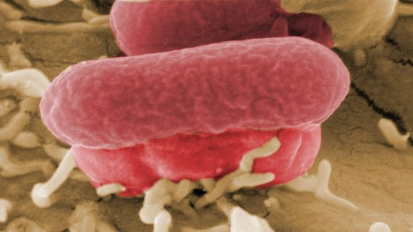 E coli - German hospitals struggling to deal with outbreak