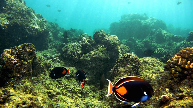 Report 35% of corals dead or dying on Barrier Reef