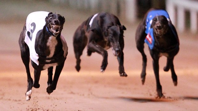 IGB to host first live Greyhound forum