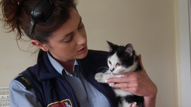 The DSPCA has re-united the kitten with his owners