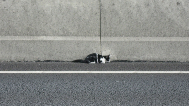 Freeway was spotted on the M50 by passing motorists