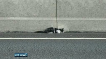 Nine News: Lucky escape for kitten trapped on M50
