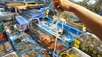 Tadhg tucked in at Noryangjin Fish Market