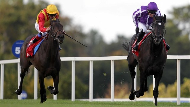 Snow Fairy - Gallantly chased home So You Think in the Irish Champion Stakes