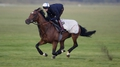 Frankel back to work after injury scare