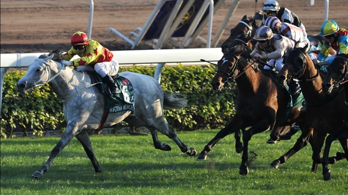 California Memory - drived out to win the Hong Kong Cup