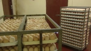 A sharp dip in egg prices pushed down the cost of food, but service prices rose during the month