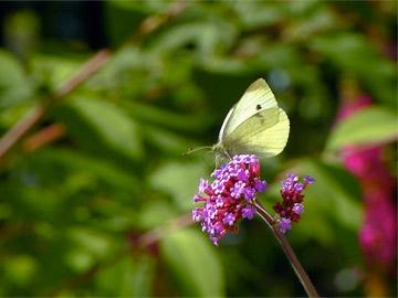 Biodversity