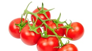 Don't keep your tomatoes in the fridge if you want to keep their flavour,according to US scientists.