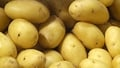 Potato Day This Saturday!