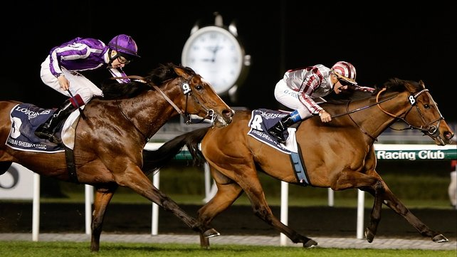 Cirrus Des Aigles, seen here holding off St Nicholas Abbey in the Dubai Sheema Classic, could be set for a busy summer in Britain