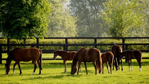 China's top agriculture graduates will spend two months at Coolmore Stud