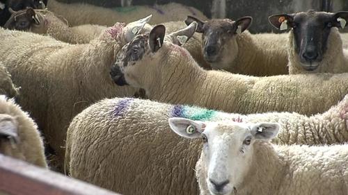The attack happened on a farm near Castlerea