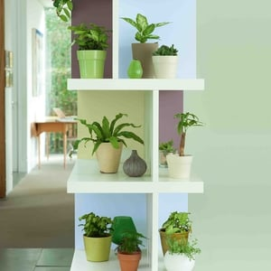 Shelving is a great way of displaying plants