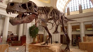 The Tyrannosaurus Rex skeleton known as Sue stands on display at Union Station in Washington DC