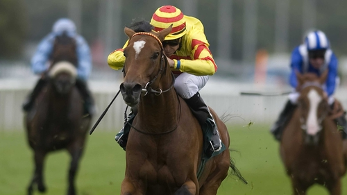 Saddler's Rock will contest the Royal Ascot Gold Cup for John Oxx
