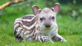 New arrival at Dublin Zoo