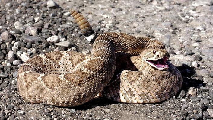 Bathroom Snake In Drumcondra