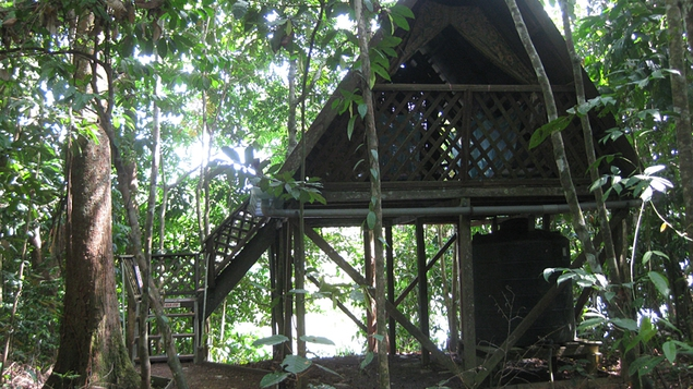 The jungle hut