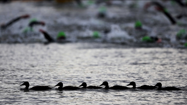 All their ducks in a row: one team had a distinct advantage in the swimming phase of the triathlon