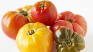 It's tomato season