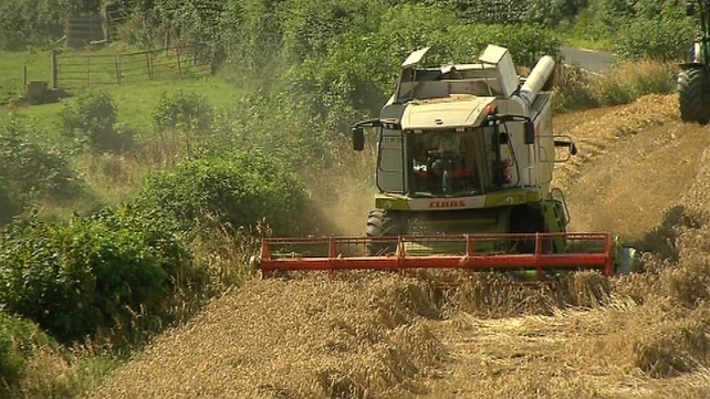 IFA estimates that bad weather this summer could cost up farmers up to €100m