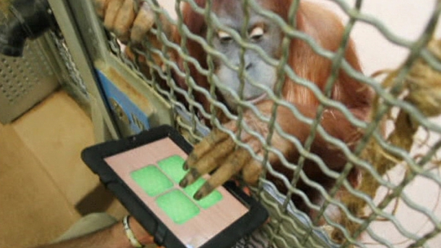 The program aims to stimulate the primates