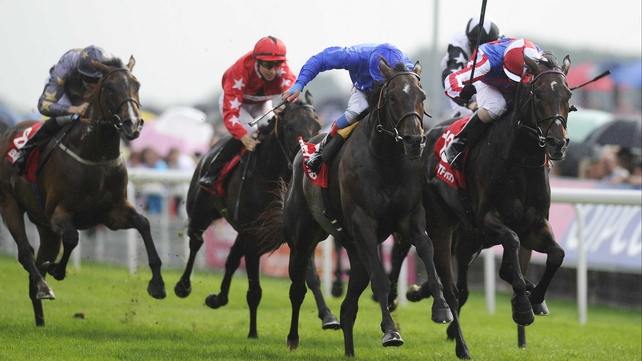 The Irish St Leger and the Melbourne Cup have opened up as possibilities for Royal Diamond (r) after his runner-up finish in the Ebor