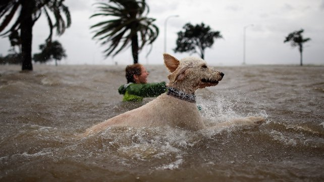 A boy and his dog swim in the rising water of Lake Pontchartrain