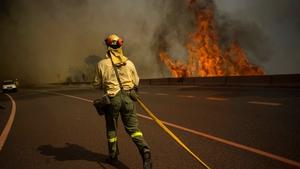 A firefighter walks on the road near a wildfire in Ojen, near the town of Malaga