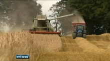 Significant improvement in grain harvest yield