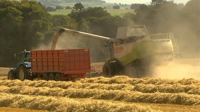 Grain farmers had feared that a large percentage of their crops would remain unharvested due to poor weather