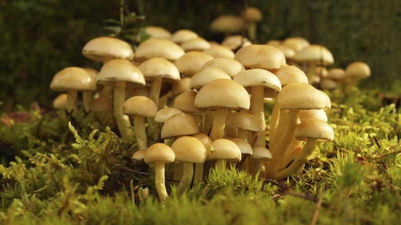 Mushroom hunting in Avondale
