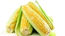 Roasted Corn on the Cob - A wonderful side order that will brighten up many dishes!