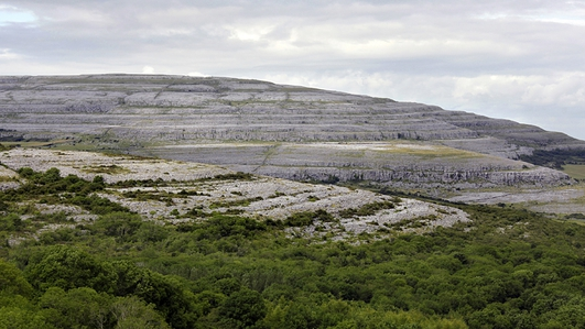 No Bees In The Burren?