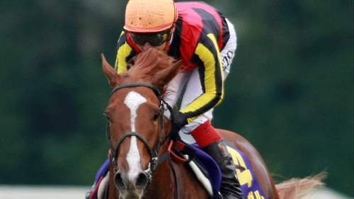 The quirky but hugely-talented Orfevre faces 17 runners in the Japan Cup at Tokyo on Sunday