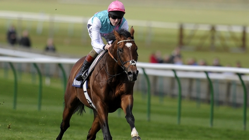 Frankel will put in a cameo appearance at Newmarket