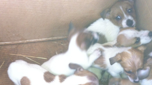 Up to 50 puppies were found in boxes