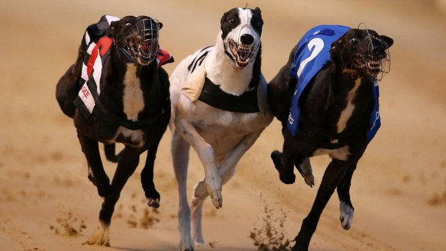The Irish Greyhound Derby final is on at Shelbourne Park this evening