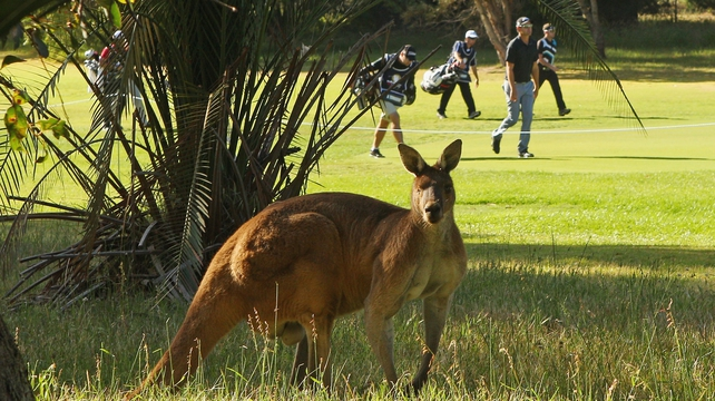 Aaron Townsend of New South Wales walks past a kangaroo