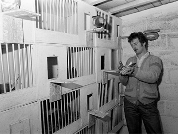 Flights of Fancy - The World of the Pigeon Men (1985)