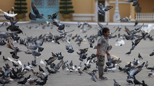 A boy plays among pigeons in front of the Royal Palace in Phnom Penh, Cambodia