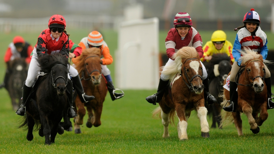 Racing in the Shetland Pony Gold Cup at Plumpton racecourse in England