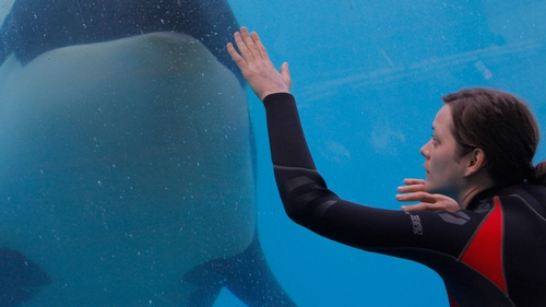 Stéphanie meets the killer whale again