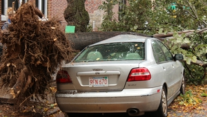 A car damaged by falling trees in Astoria/Long Island city district (Pic: Jessica Pitcher)