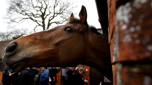 Kauto Star has left his box at Ditcheat for the final time