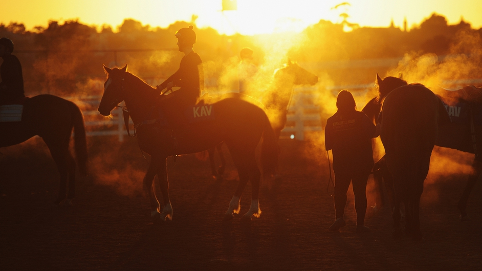 Horses all steamed up return after trackwork at Flemington Racecourse in Melbourne