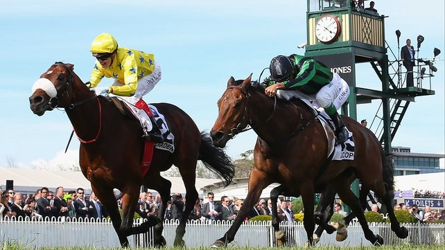 Mikel Delzangles' Dunaden (l) is bidding for back-to-back Melbourne Cups
