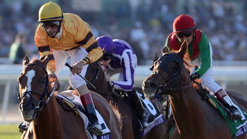 Animal Kingdom (red cap) was a strong-finishing second behind Wise Dan (yellow) in the Breeders' Cup Mile